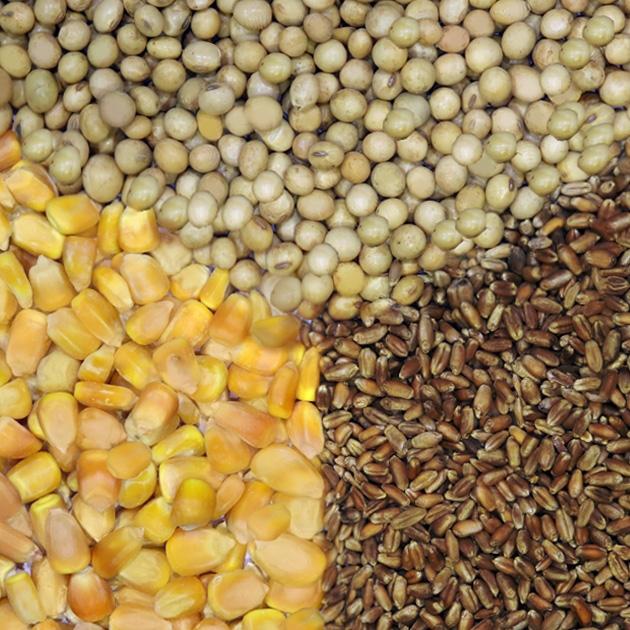 Soybean, Wheat and Corn 1